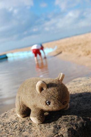 Morris at the beach (2 of 32)